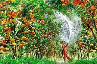 Đâu là những vườn trái cây nổi tiếng tại Miền Tây?